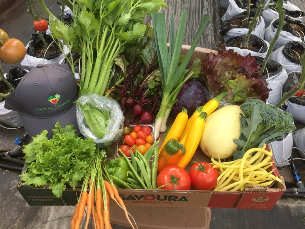 8 septembre 2017- panier de légumes Alain Maltais
